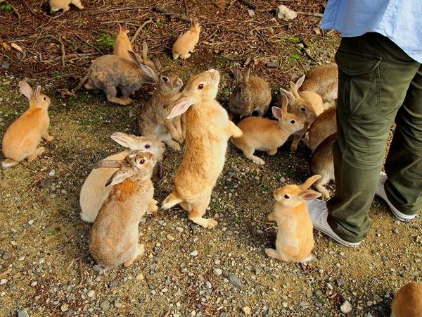 写真は、Journal Bunny Footprint からお借りしました。 うさぎ島 大